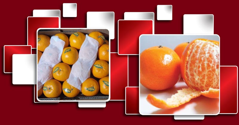 Premium Quality Pakistan Kinnow Exporters and Suppliers