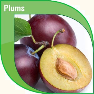 Pakistan Fresh Fruits Exporters and Suppliers - Anchor